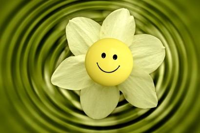 flower-233838_960_720