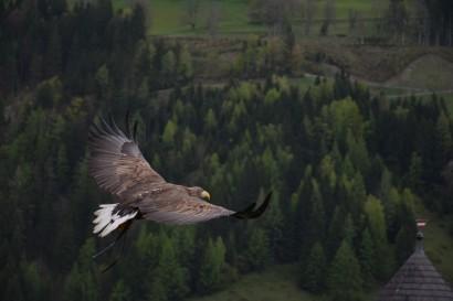 bird-wing-animal-fly-wildlife-flight-1338651-pxhere.com