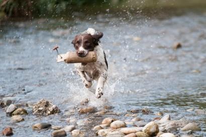 water-run-dog-wildlife-mud-mammal-652125-pxhere.com